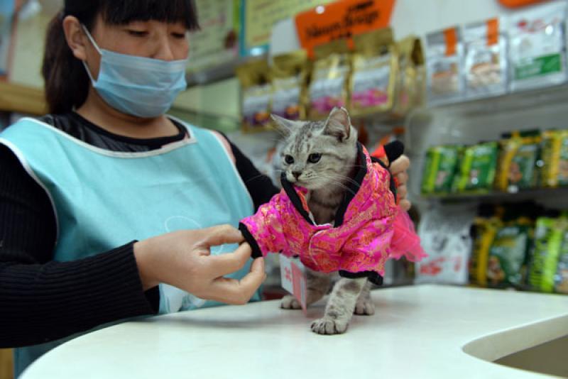 """【Daniel_I】猫经济兴起 今天你""""吸猫""""了吗?"""