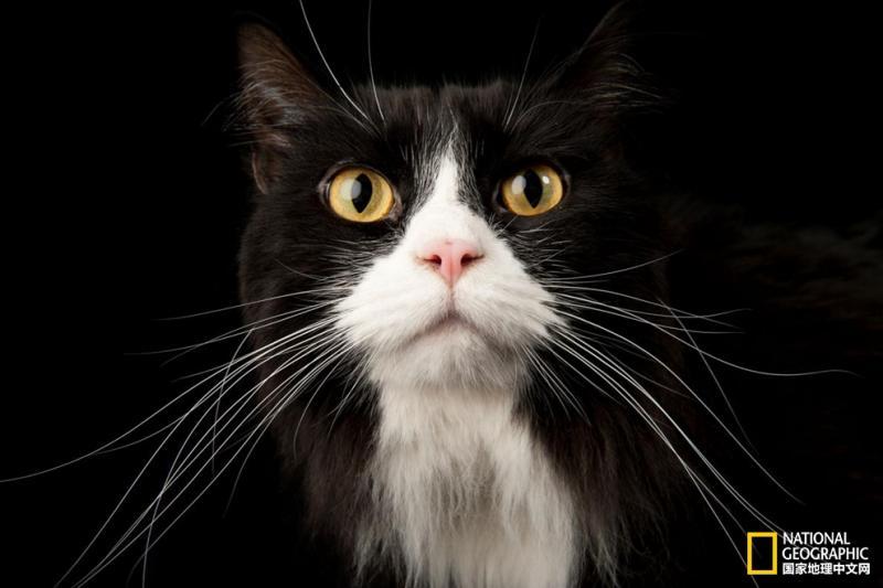 【古城小巷红尘客】宠物的心思你别猜,让专家来揭秘吧