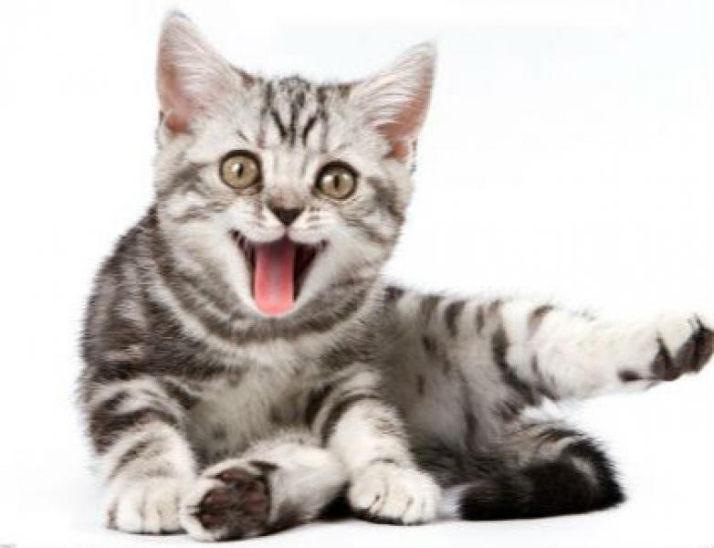 【光着屁股的猫】猫咪需不需要绝育? 为什么要绝育?猫咪绝育的好处和必要性!