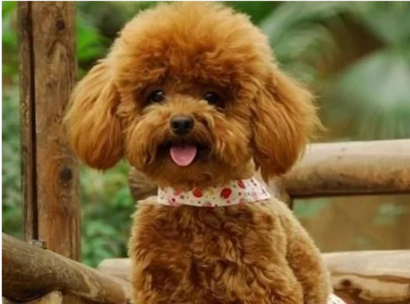 【 巨小萌宠物狗狗服务店】情感经济宠物狗,优宠天下高歌猛进