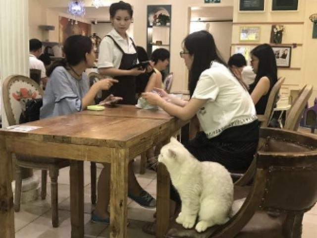 """""""宠物经济""""升温 多行业挖掘宠物消费市场商机"""