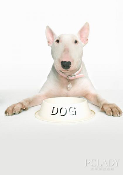 【广州乐贝宠物生活馆】中毒宠物狗的各种急救知识