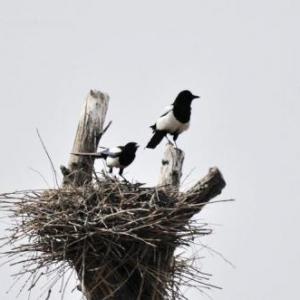 筑巢(建筑设计)服务分享社区圈子