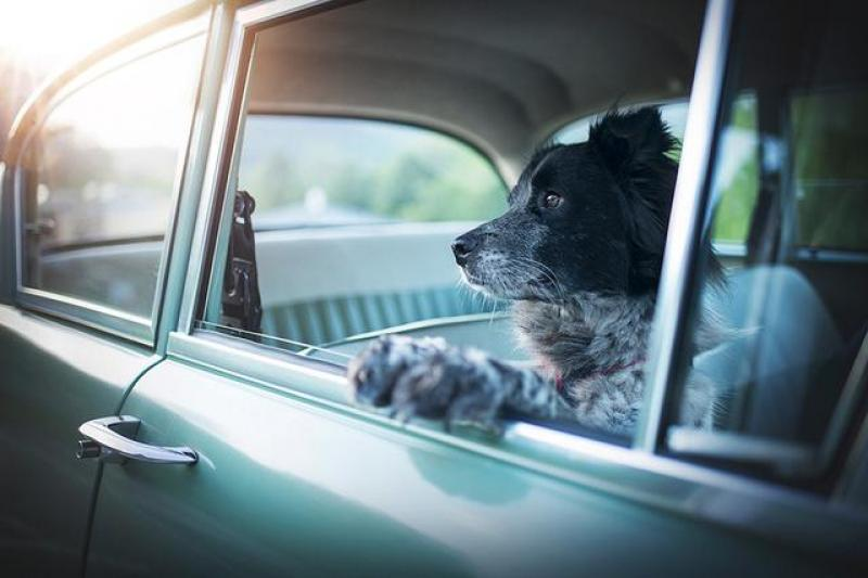 【沿着时光游走】宠物摄影怎么拍?大咖 Anne Geie 为你支几招