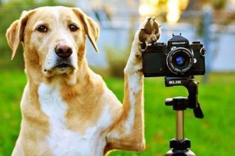 【古城小巷红尘客】宠物拍摄小技巧:如何拍摄高大上的宠物照片!