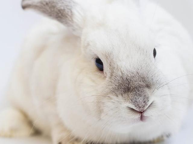带着兔子去宠物店理发,剪着剪着发现不对劲,看清后笑哭了