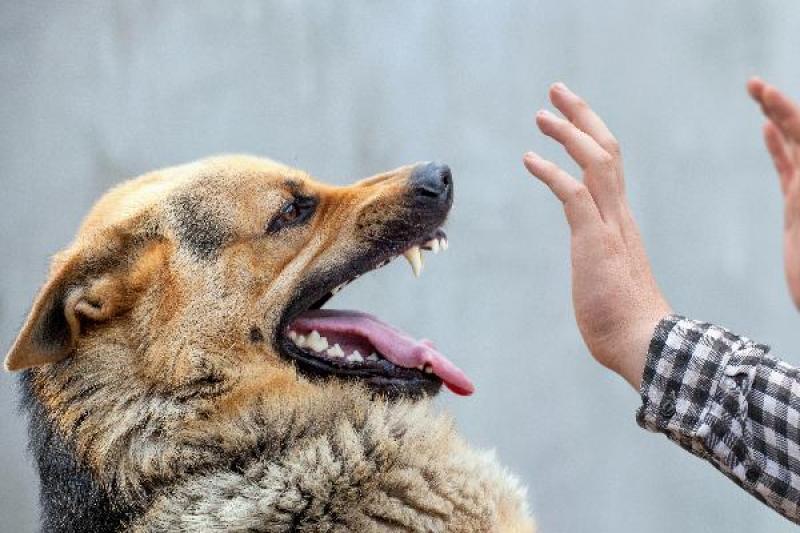 狗狗变得喜欢咬人!狗这3种攻击迹象,主人发现了就得制止