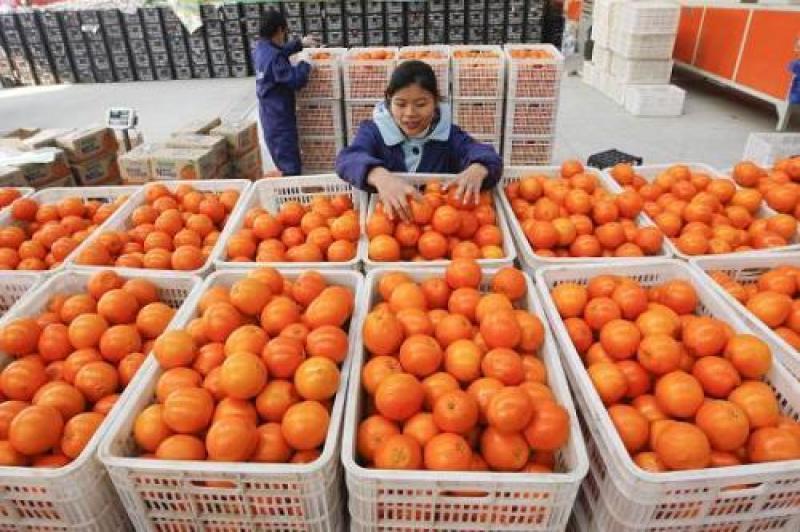 """【冷颜温柔冰寒天】最近水果为什么涨价,减产、囤货、还是电商""""抢果""""?"""