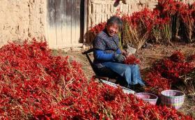 【生物毁了我的清白】秋天来山西临汾的农村 秋收的美景看不够 大城市人看了就不想走