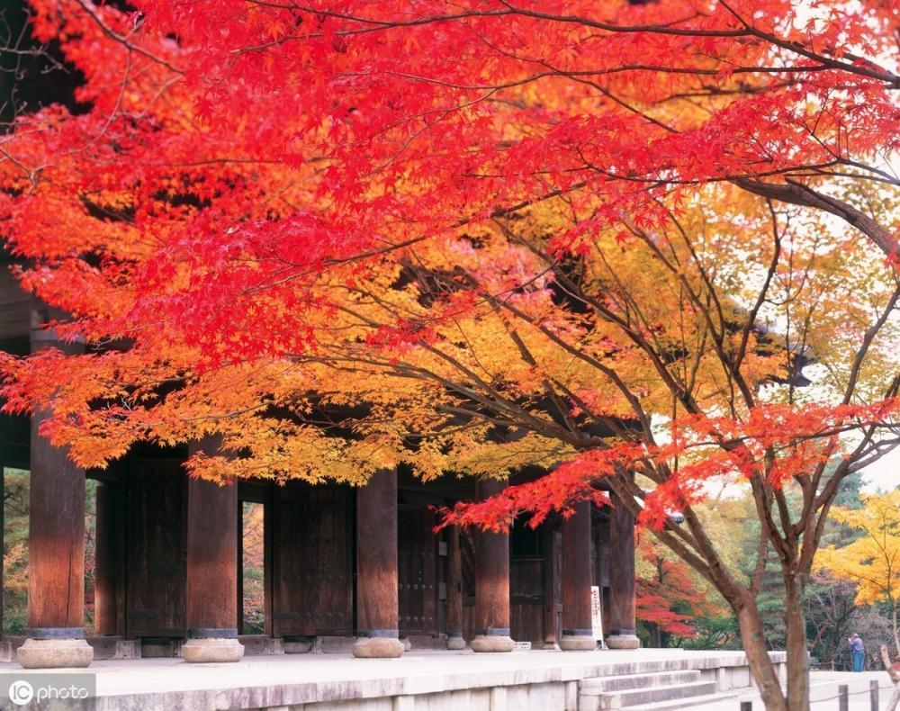日本绝美赏枫地 入秋去岛国赴一场秋天的约会吧