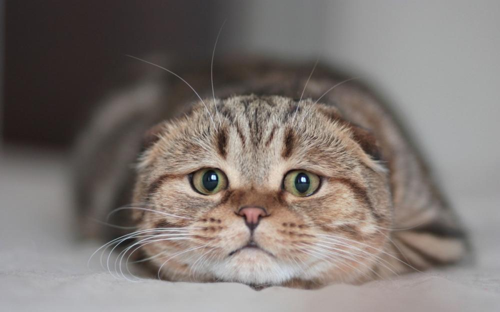 世界上最萌的七种宠物猫,你最喜欢哪一种?