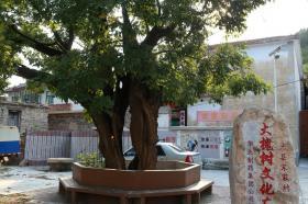 日寇炮弹为何炸不死这棵800岁高龄的大槐树?听村民道破玄机