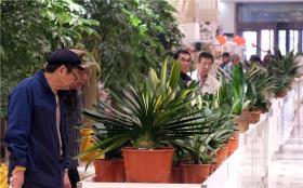 【哇好像筷子精】八十万元君子兰亮相沈阳君子兰文化展
