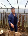 """图片上这位中年农民姓刘,叫刘智平,今年46岁,是陕西略阳张家坝村农民,平时爱钻研农业技术,先后搞过种植、养殖都没怎么赚钱,后来他开始钻研食用菌技术,在家门口搞起食用菌大棚,引进一种""""金木耳"""",一年能收入100万元,一下子发了财,让村民们羡慕不已。"""