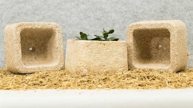 用蘑菇做塑料袋,用完还能当肥料
