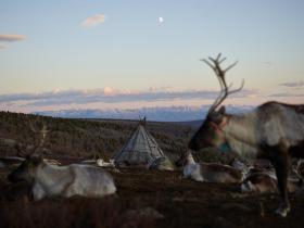 蒙古北部深山里鲜为人知的驯鹿人,照片里的他们坚毅而淳朴,很美