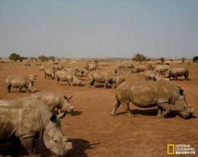 跟随摄影师一起,来见识下世界上最大的犀牛农场