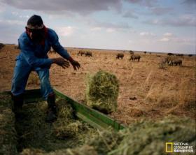 【青笺画卿颜】跟随摄影师一起,来见识下世界上最大的犀牛农场