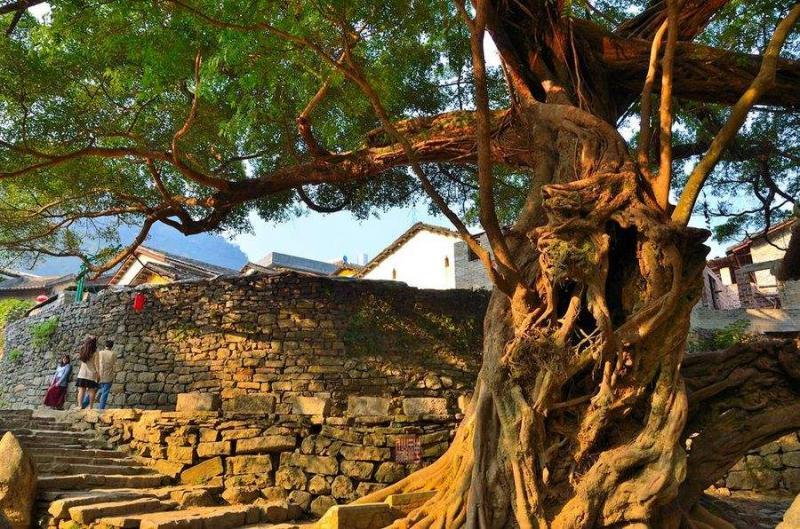 【格子涂过的夏天】贵州规定砍伐古树名木每株最高罚50万元