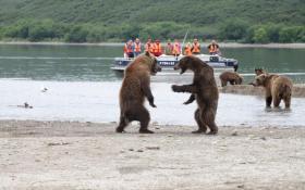 """【章曼冬】俄俩""""绅士""""棕熊吵架不动手 一船游客""""吃瓜""""津津有味"""