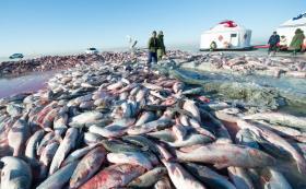 【蠢萌小棉袄】查干湖冬捕:捕获大鱼数量众多,丰收场景震撼人心