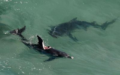 镜头下:动物世界的惊魂时刻