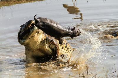 【唐伯虎点蚊香】镜头下:动物世界的惊魂时刻
