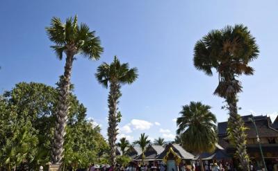 春节去哪里?西双版纳多彩的民族文化,丰富的热带资源