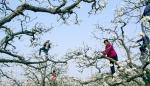 【白裙红衣的姑娘】春时风入户 梨花吐芬芳
