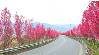 """汉源九襄""""十里桃花""""大道让你这个春天不辜负"""
