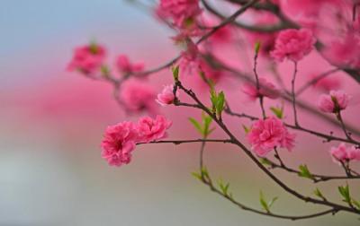 """【卖萌嘟嘴萌妹纸】汉源九襄""""十里桃花""""大道让你这个春天不辜负"""