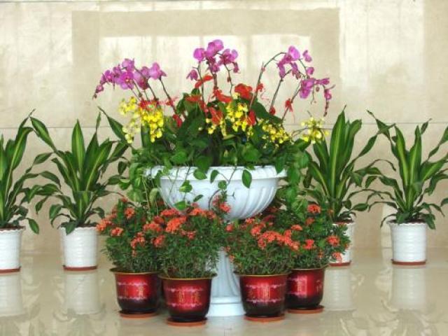 花卉租摆、上门服务、办公室绿植花卉租赁
